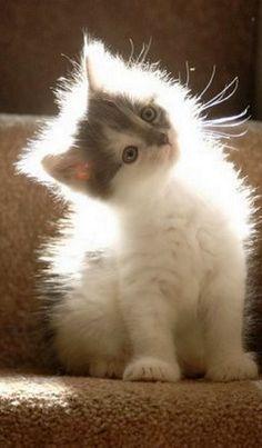 light  shining through this sweet kitty's fur.