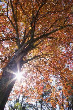 PENTAX Photo Gallery : Sunlightfoliage - by David Fletcher
