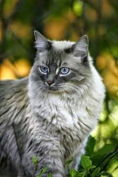 cat This cat is too cool Cats ? hi cats Pretty Cats, Beautiful Cats, Animals Beautiful, Cute Animals, Pretty Kitty, Small Animals, Baby Animals, Cute Kittens, Cats And Kittens