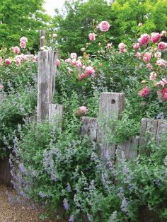 Country cottage garden with a nice grey fence and roses Country Cottage Garden, Cottage Garden Plants, Garden Spaces, Garden Beds, Cottage Gardens, Garden Roses, Cacti Garden, Lavender Garden, Sun Garden