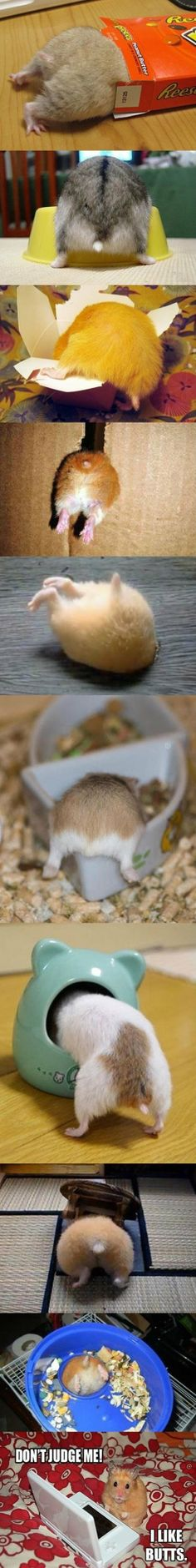 crack a lackin hamster pictures