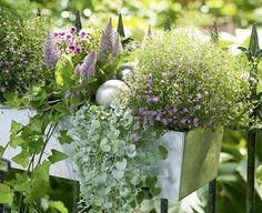 Wer es gerne außergewöhnlich und edel mag, wird vom Pflanzenarrangement in diesem Kasten begeistert sein.