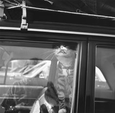Vivian Maier: self portraits