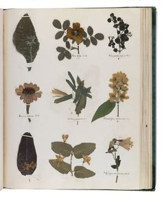 Emily Dickinson's Herbarium, digital facsimile. By  permission of the Houghton Library, Harvard University; via nybg