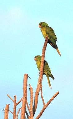 Why parrots aren't likely visitors | StarTribune.com