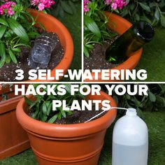 Keep Your Plants Happy And Hydrated With These 3 Self-Watering Hacks