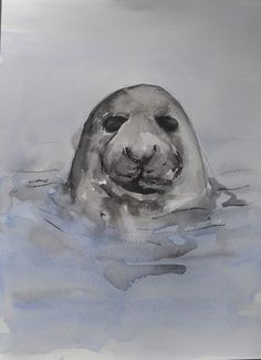 Grey Seal - Ink and mixed media Painting by Suzy Sharpe - www.suzysharpe.co.uk