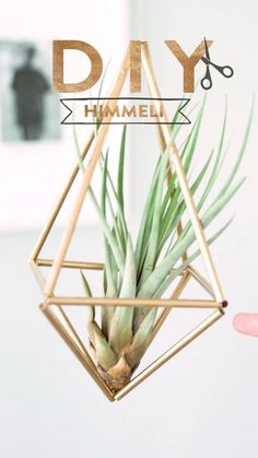 # Heaven DIY Westwing: Heavenly Best Picture For Decoration Cuartos For Your Taste Yo Diy Crafts Hacks, Diy Home Crafts, Diy Crafts To Sell, Diys, Diy Casa, Deco Floral, Plant Decor, Air Plant Display, Hexagon Shelves