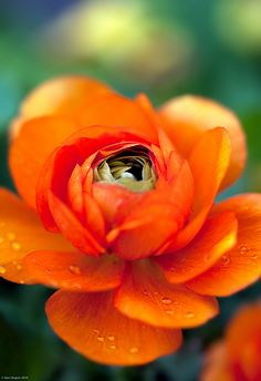 Orange things makes me happy by © alan shapiro photography, via Flickr.com