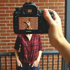 camera, clever, creative, Funny, heads, Inspiration, instagram, owners, pets, Photography