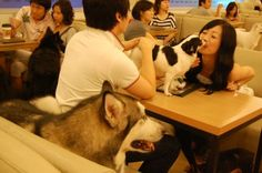 Oh yes! It's the infamous dog cafes that are popping up around Seoul. And no, I am not talking about a cafe that you can bring your dog to. That would be too normal. This is cafe that houses an assortment of dogs and puppies. Drink a latte and play with a pup!