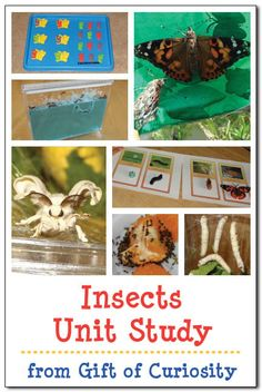 Insects make a great topic of study for preschoolers, kindergarteners, and early elementary students. Unlike many animals one might choose to study (e.g., polar animals), it is comparatively quite easy to observe the habitats, behaviors, and life cycle of insects up close. These observations may take place either in nature or by creating an insect habitats indoors; …