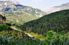 Taygetos-driving. trees and breathtaking scenery that unfolds before you .... priceless ..!