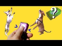 ▶ What is clicker training?- dog training - YouTube