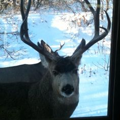 The gals saw him peeping in late one afternoon.