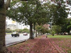 We Love #Buenos Aires: 9 de Julio #Avenue Sidewalk, Country Roads, Love, Buenos Aires, Argentina, Amor, Side Walkway, Walkway, Walkways
