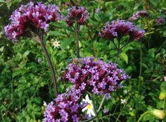 CIMG4968 675 Plants, Plant, Planting, Planets