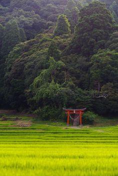 Forest of a village shrine ,Japan Japan Countryside, Countryside Landscape, Forest Landscape, Landscape Photos, Landscape Photography, Nature Photography, Japanese Landscape, Japanese Architecture, Image Japon