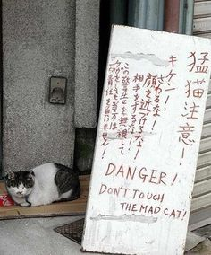 Spooky Signs that Say a lot with their Creepiness - The internet has generated a huge amount of laughs from cats and FAILS. And we all out of cats. Like A Cat, I Love Cats, Cute Cats, Baby Cats, Cats And Kittens, Get Off My Lawn, Japanese Cat, Super Cute Animals, Cat Colors