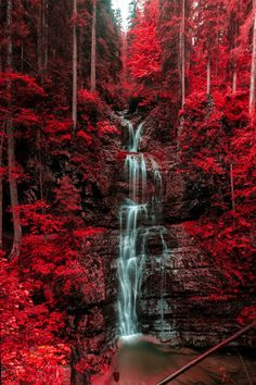 tumblr_mtzxkiQwfD1rub0hvo1_500.png (500×750) Trees Beautiful, Beautiful Forest, Beautiful Images, Beautiful Landscapes, Beautiful World, Most Beautiful, Forest Waterfall, Red Pictures, Nature Pictures