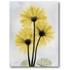 Golden Flower II Graphic Art on Wrapped Canvas