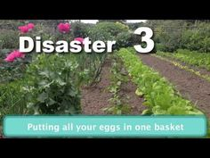 ▶ Gardening Disasters and How to Avoid Them, great new video to help you bypass these challenges from growveg.com - YouTube