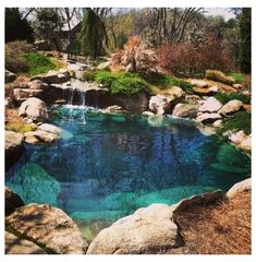 Swimming Pool Pond, Natural Swimming Ponds, Swimming Pool Landscaping, Natural Pond, Swimming Pool Designs, Indoor Swimming, Natural Garden, Swimming Pool Architecture, Backyard Pool Designs
