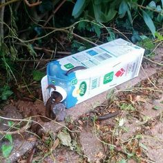 Build a poison-free slug trap by first mixing one liter of water 25 g of malt extract and 30 ml of alcohol. The angered Slug Trap, Vegetable Garden, Garden Plants, Tricks, Gardening Tips, Outdoor Gardens, Garden Design, Diy And Crafts, Life Hacks