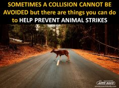 We share the roadways, homes and work places with the furry creatures but we should be extra careful driving during certain times of the day and year. Read more about it here: http://www.stmarysautobody.com/index.php/2017/08/29/animal-strikes-what-to-do-and-who-to-call/