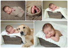 newborn baby photo shoot with dog, golden retriever