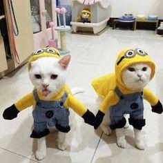 Resultado de imagen para cat costumes contest