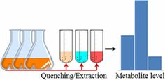 Quantifying the Metabolome of Pseudomonas taiwanensis VLB120: Evaluation of Hot and Cold Combined Quenching/Extraction Approaches