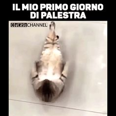 9833d6d02fe9c0bba93ef4b37ccc47dd.gif (400×400) Really Funny, Funny Cute, Funny Memes, Jokes, Foto Instagram, Funny Photos, Vignettes, Animals And Pets, Cat Lovers