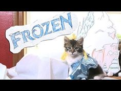 Disney's Frozen has been one of the winter's biggest box office hits. The animated film has already been released in a sing-a-long version, so it's a natural to be remade by kittens.