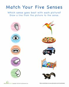 Worksheets: Your Five Senses: Matching 5