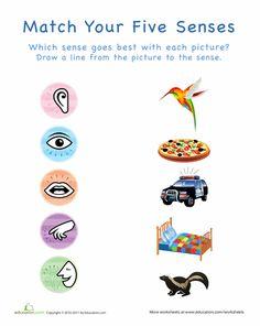 Worksheet Five Senses Worksheet For Kindergarten worksheets for kindergarten about me and all on pinterest