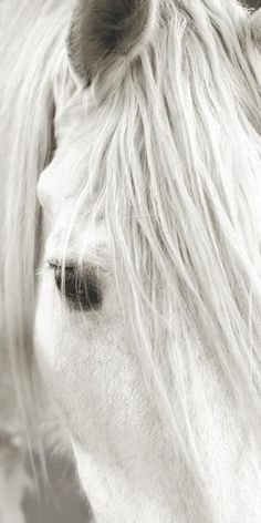 The bright white and wise horses eye of a lifetime. -ashlynn ferguson