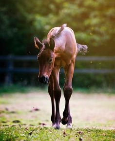 Pretty baby foal aww so cute! Can't believe Canyon is going to be seven this summer!