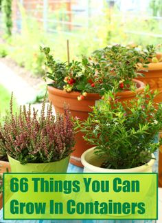 66 Things You Can Grow in Containers: Tree Fruits, Citrus Fruits, Vegetables, Spices & More!