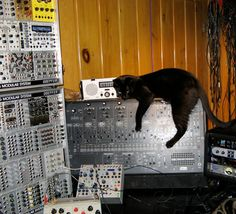 ARP 2600 with a black cat