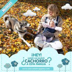 Nosotros debemos cambiar nuestros hábitos, y nuestras mascotas también. ¿Qué debes tener en cuenta si hay un perro en la familia? http://escuelahuggies.com/Ciencias/Que-hago-con-mi-perro-cuando-llegue-mi-bebe-.aspx