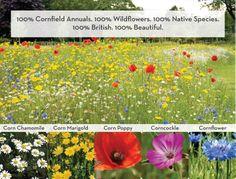 100% Native British wildflowers 100% Beautiful British Flowers, Flower Bird, Marigold, Wildflowers, Nativity, Poppies, Garden Ideas, Birds, Tattoos