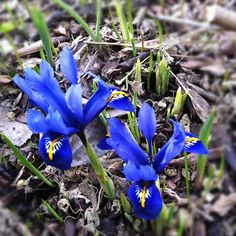 spring flowers - Photo from Scandinavian Cottage
