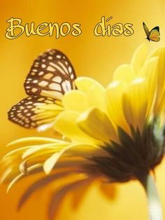 Photographic Print: Close-Up Studio Shot of a Delicate Monarch Butterfly Resting on a Yellow Asteraceae Flower : Good Morning Gif, Good Morning Messages, Good Morning Images, Morning Quotes, Coffee Presentation, Spanish Prayers, Spanish Greetings, Mom Prayers, Happy Week