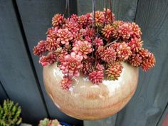 I really like this plant and container combination. Colors and textures are lovely together.