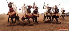 Arabian Horse by Ayoub Gouach on 500px