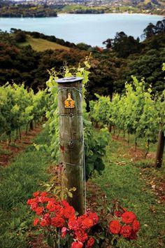 vineyard - Waiheke Island, New Zealand Best Places To Travel, Places To See, New Zealand Wine, Waiheke Island, Wine Vineyards, Napa Valley Wine, Kiwiana, The Beautiful Country, In Vino Veritas
