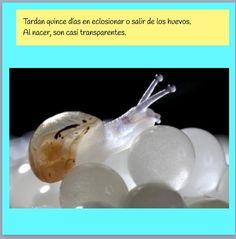 Reme Bayarri. Eclosión de los caracoles.