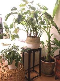 Tropical Houses, Gardens, Indoor, London, Plants, Tropical Homes, Interior, Outdoor Gardens, Plant