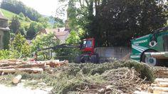 Branches broyage bois → Forêt dans La Ville → Sainte-Marie-Aux-Mînes